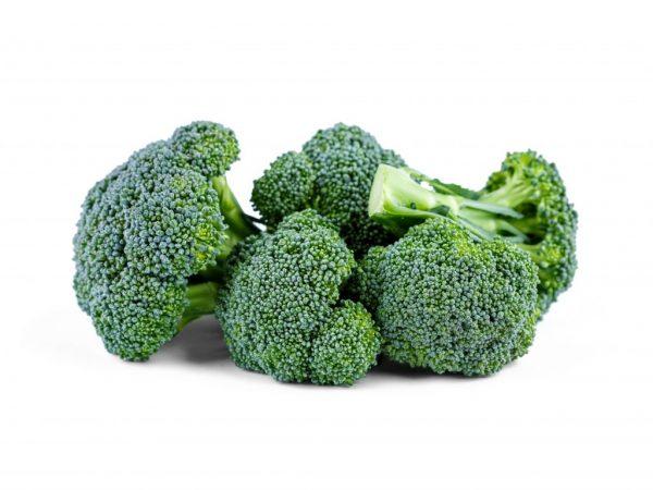 Правила выращивания брокколи в Подмосковье