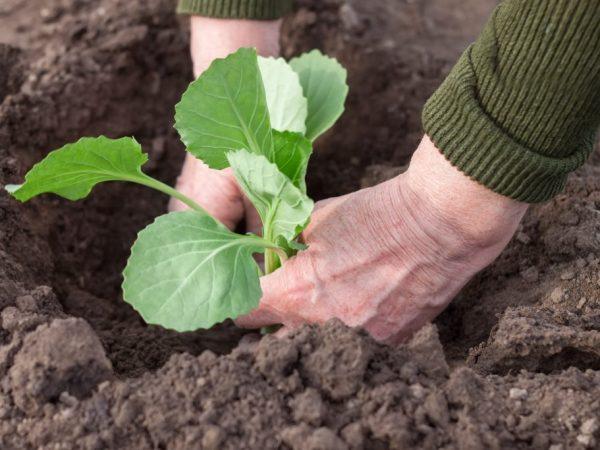 От качества почвы зависит будущий урожай