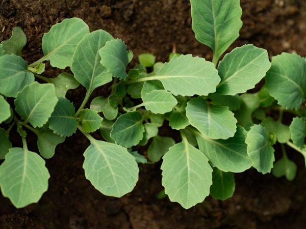 Поддерживайте оптимальную для растений температуру