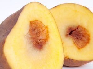 Разновидности гнили картофеля