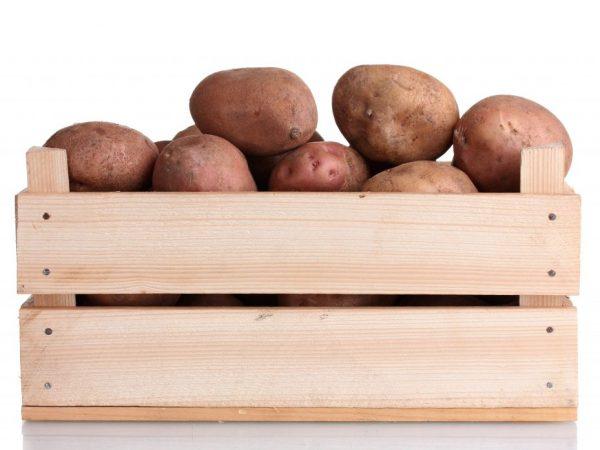 Срок хранения картофеля можно увеличить