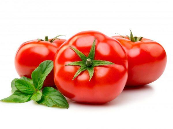 Хранение свежих помидор