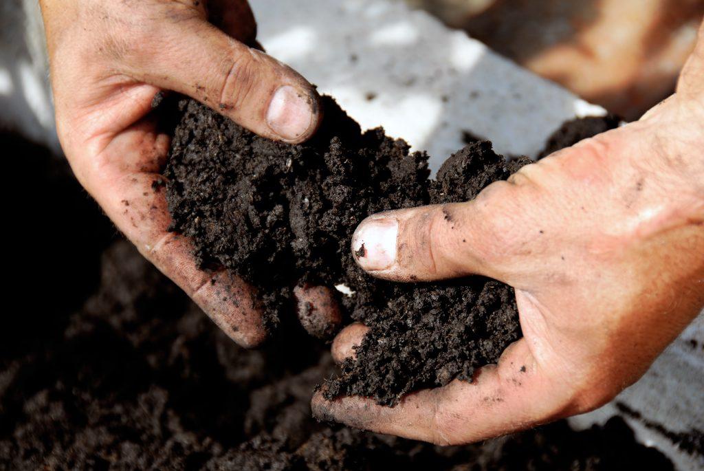 Кислотность почвы для огурцов: какая должна быть
