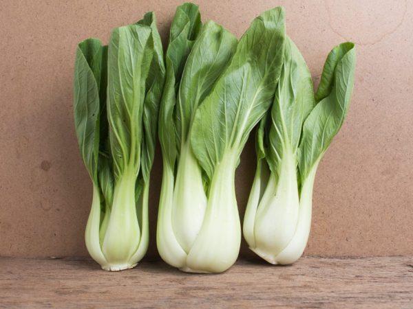 Правила выращивания капусты сорта пак-чой