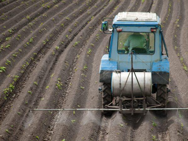 Применение Лазурита от сорняков на картофеле