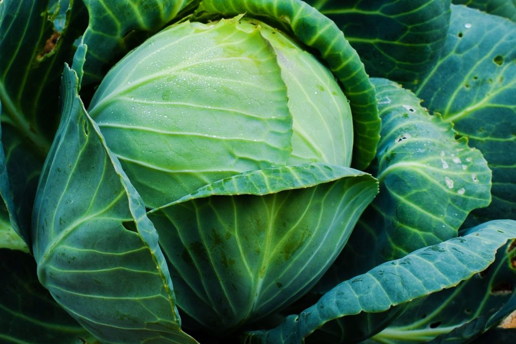 Лучшие сорта поздней капусты для хранения