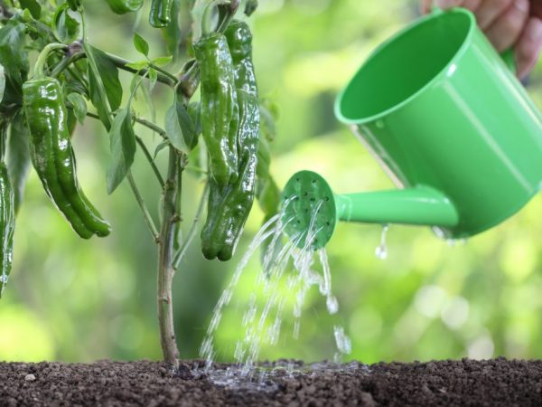 Подкормка поможет растениям лучше развиваться