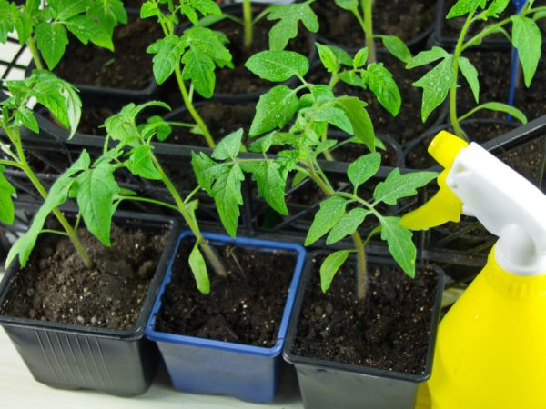 Опрыскивание поможет развитию растений