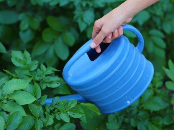 Подкормка насыщает растения минеральными веществами