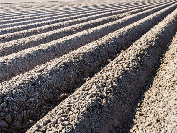 Почва должна прогреться