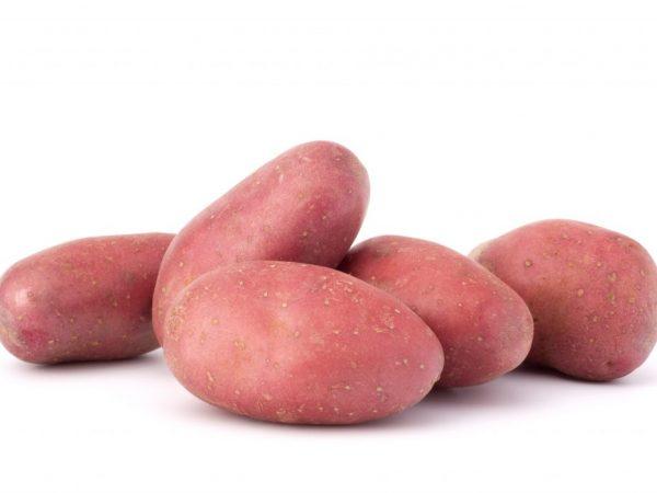 Описание картофеля Ред Леди
