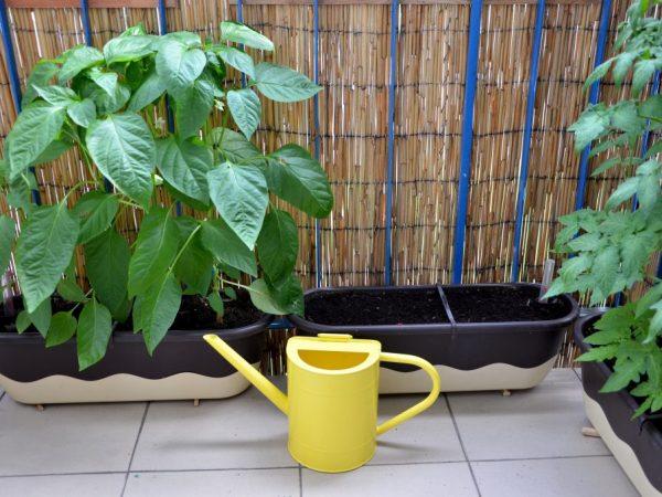 Тщательно распланируйте места для посадки овощей