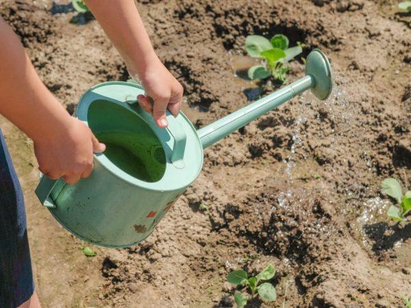 Эффективные удобрения для капусты