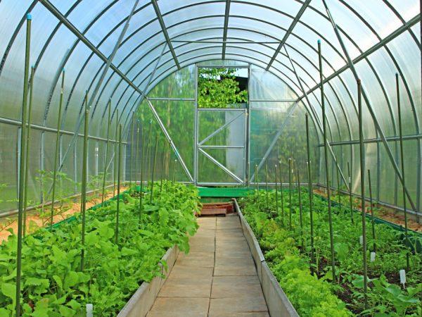 Конструкция теплицы влияет на срок высаживания томатов