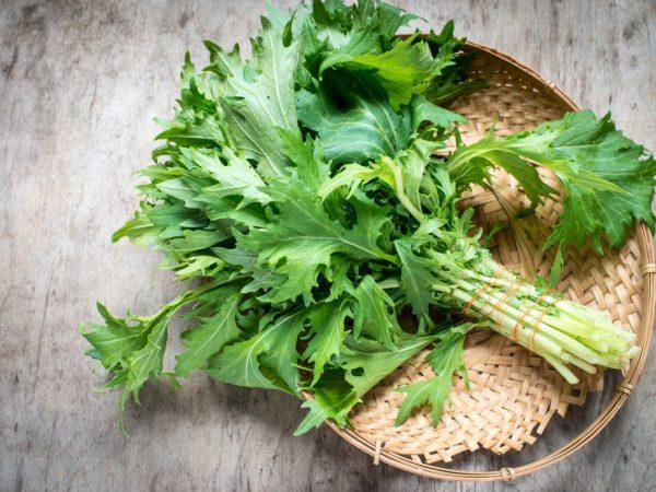 Характеристика капусты сорта Японская Русалочка