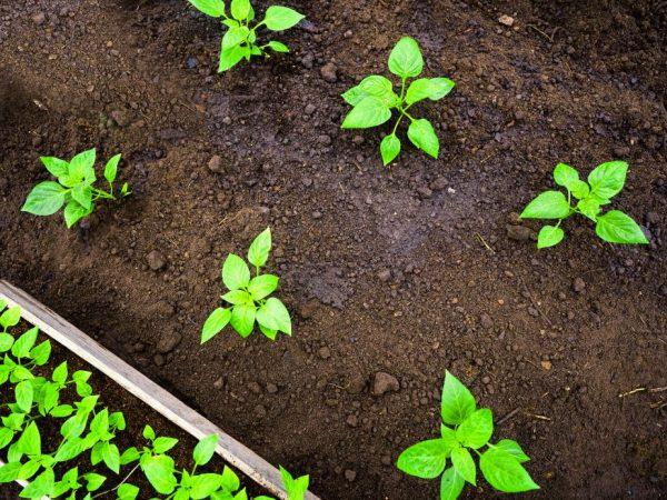 Растения поливайте только тёплой водой