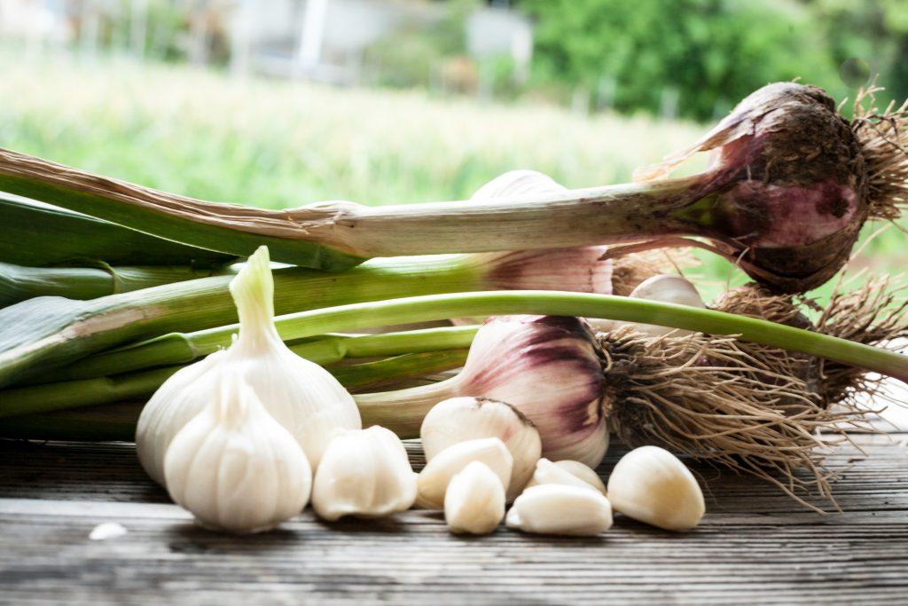 Выгодно ли выращивать чеснок на продажу