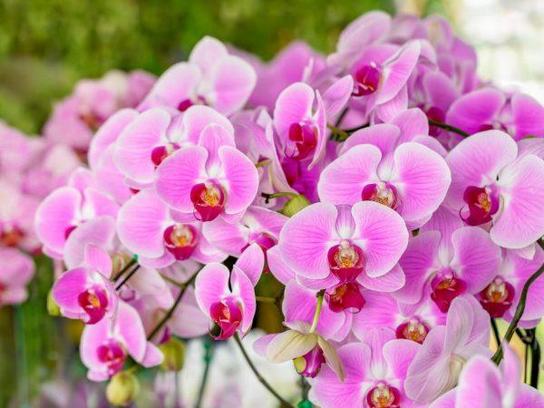 Основные болезни орхидей и их лечение