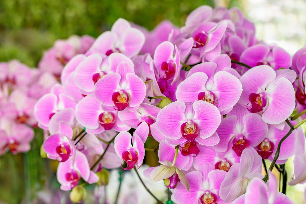 Как лечить орхидею. Советы специалиста
