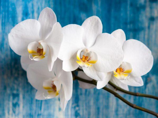 Циркон и Эпин для орхидей