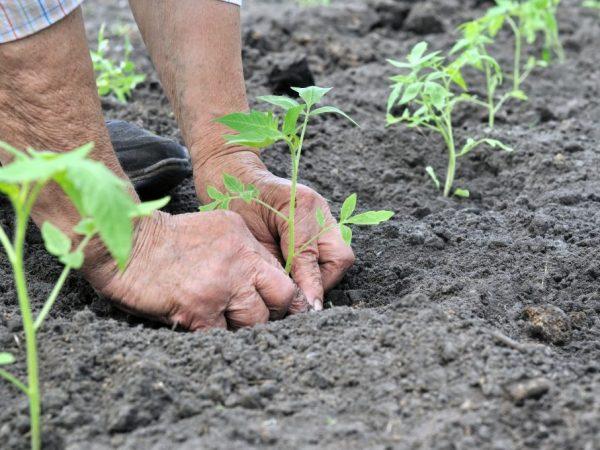 Глубина посадки важна для развития растений