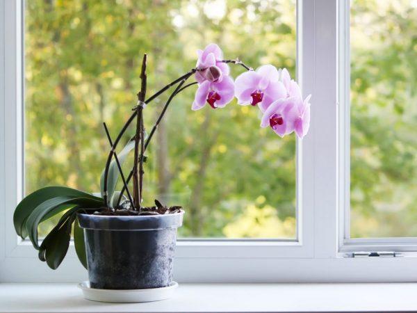 Выбор горшка для орхидеи