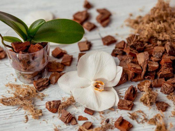 Выбор грунта для орхидеи фаленопсис