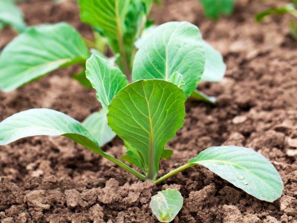 За растениями нужно хорошо ухаживать