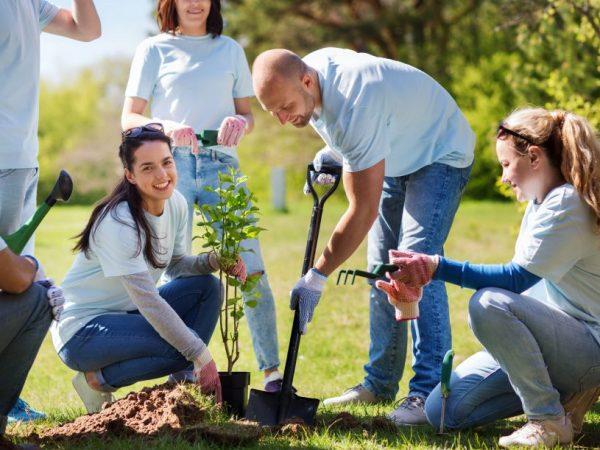 Правила посадки груши весной