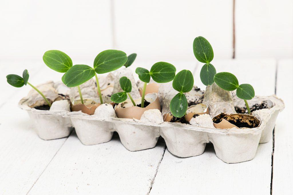 Яичная скорлупа как удобрение для помидоров, огурцов, картофеля и прочих культур