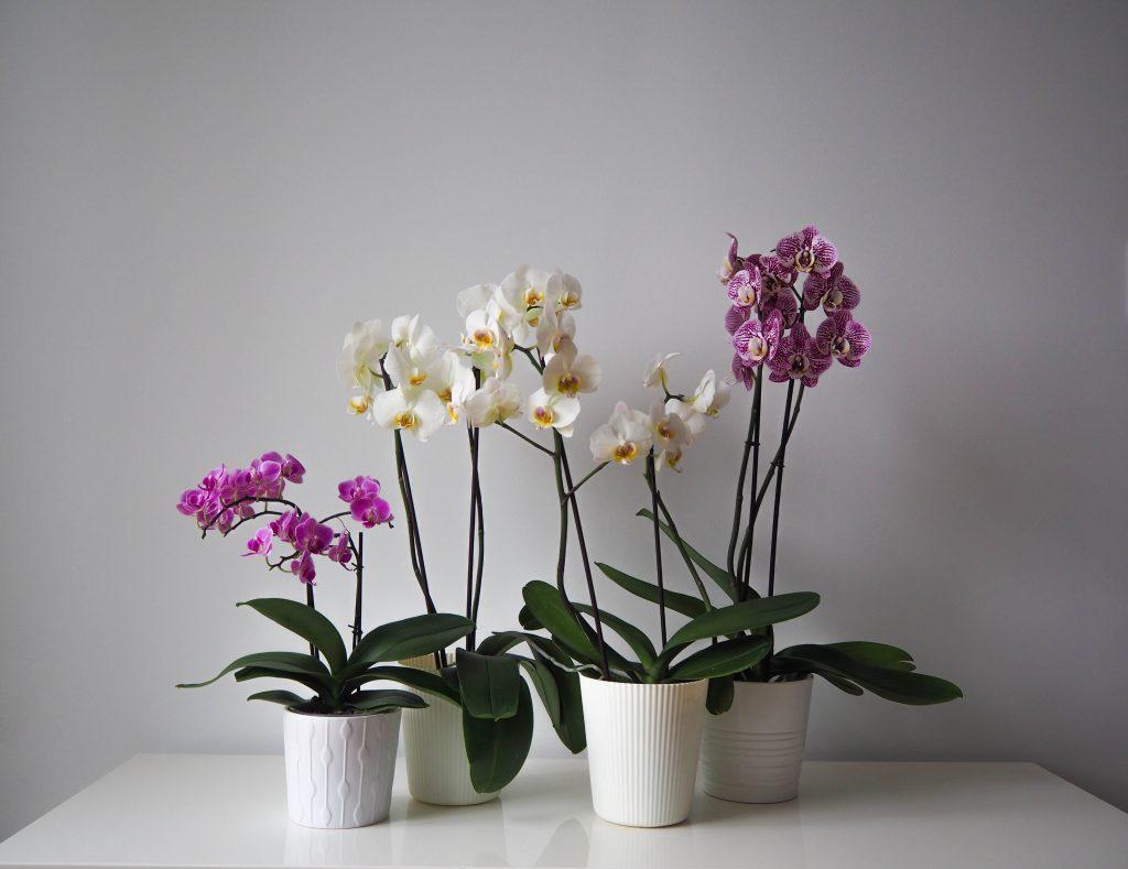 молодости какие горшки нужны для орхидей фото бесплатные