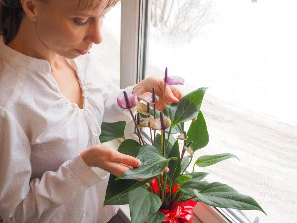 Способы лечения цветка