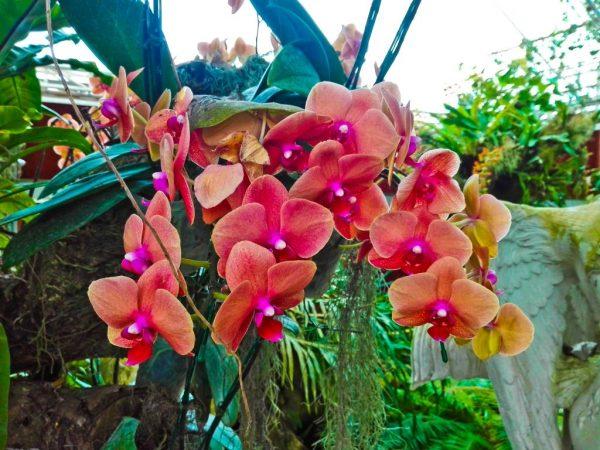 Что делать с потерей тургора листвы у орхидеи
