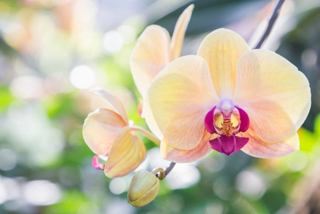 ничего картинки шикарные орхидеи цветы отформатировать поздравление