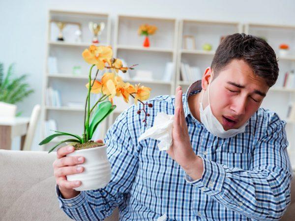 Вызывает ли орхидея аллергию