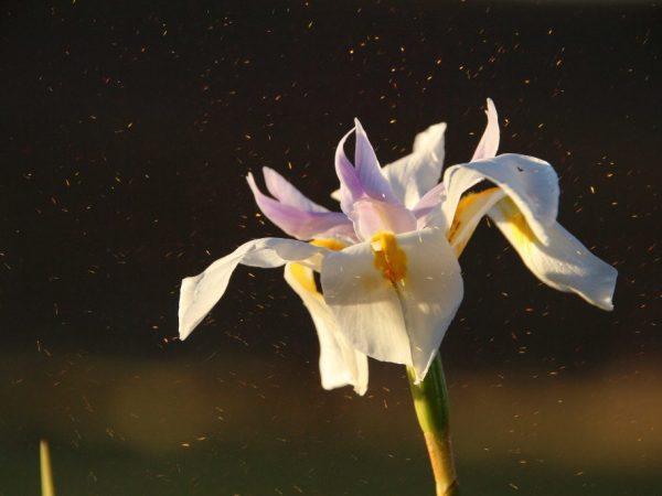 Орхидея на многих действует негативно