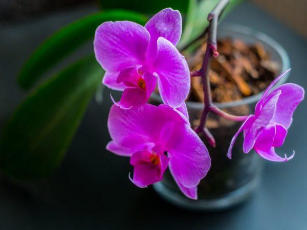 Фиолетовый цветок поможет бороться с ленью