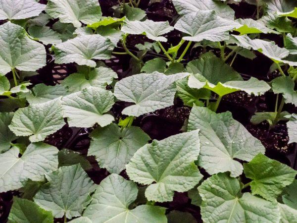 Обеспечьте растения хорошим уходом