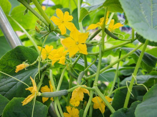 Обеспечьте растения полноценным уходом