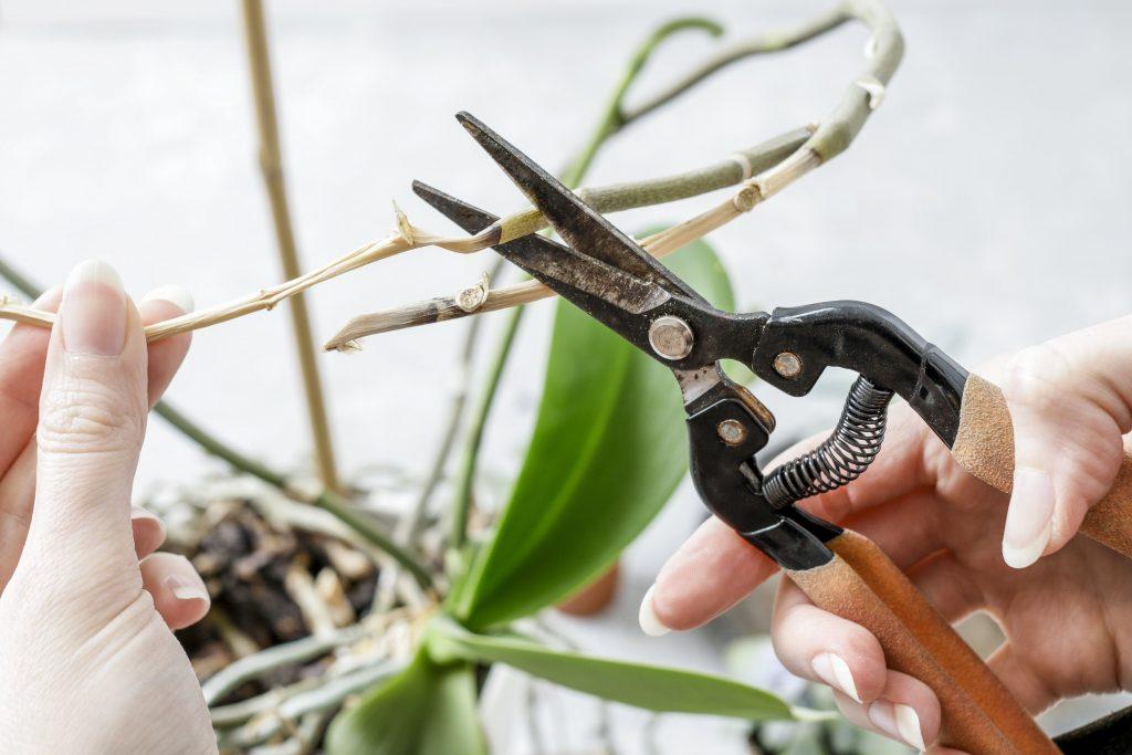 Как обрезать корни у орхидеи — Цветок домашний