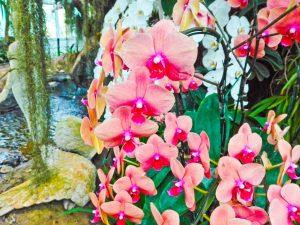 Орхидеи без цветоноса