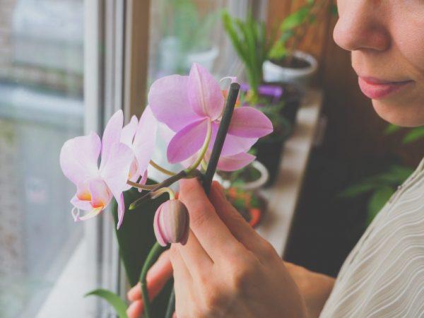 Условия пересадки могут меняться в зависимости от ухода и содержания растения