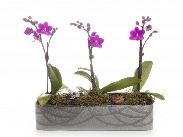 Орхидее нужно много света