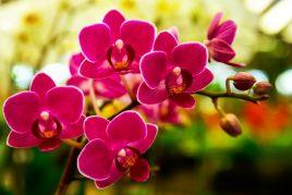 Как вылечить гниль у орхидеи