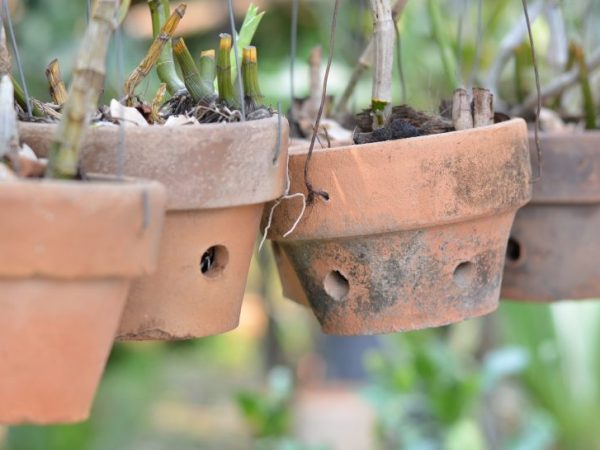 Горшок для орхидеи Ваниль