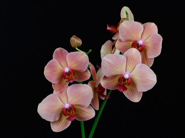 Создание дополнительного освещения для орхидеи