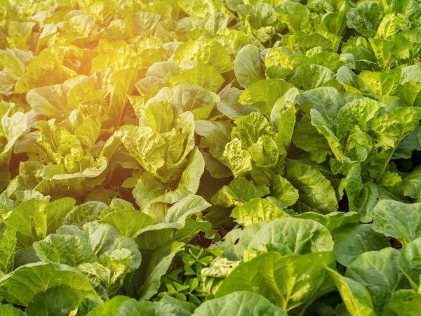 Обеспечьте растениям хороший уход