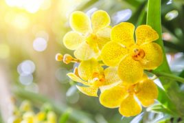 Как помочь орхидее с сухими корнями