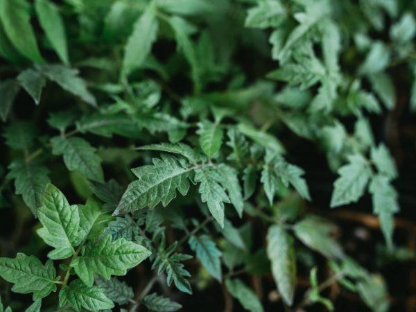 За растениями легко ухаживать