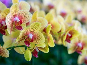 Рибав-экстра для орхидей